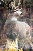 Mule Deer bock